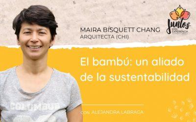 El Bambú: Un aliado de la sustentabilidad